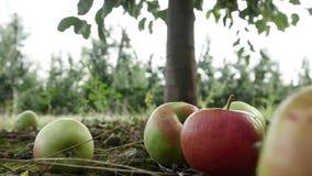 Fruttifichi nel giardino, mela sull'erba stock footage