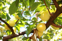 Fruttuoso Fotografie Stock