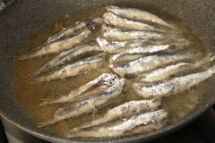 Fry of anchovies Stock Image