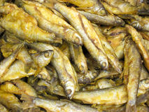 Fry fish Stock Photography