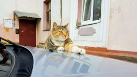 cute red cat lying on the hood of the car in the yard of old houses stock image