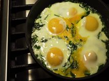 Frying eggs with chives stock video footage