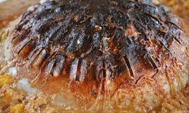 Frying Pan Burns Royalty Free Stock Photography