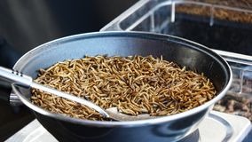 Fried mealworms at street food market Royalty Free Stock Photos