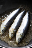 Frying sardine Royalty Free Stock Images