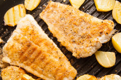 Free Frying Tilapia Royalty Free Stock Photos - 74073998