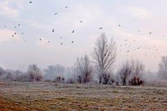 Frysa dag i lägre Silesia Royaltyfri Fotografi