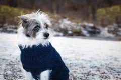 Frysa den iskalla hunden i snö royaltyfria foton
