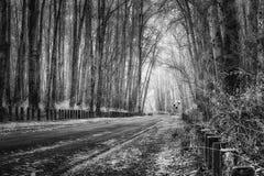 Frysa dimma glasera trädet fodrad väg Royaltyfria Foton