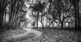 Frysa dimma täcker landskapet Royaltyfri Bild