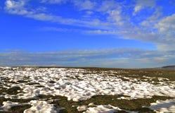 Frysa gräs i tundraklimat Royaltyfria Foton