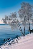 Frysa morgon i Lake Ontario royaltyfri foto