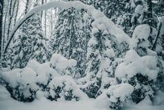 Frysa nattsnowstorm för dag efter räknade snowtrees toning Fotografering för Bildbyråer