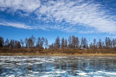 Frysa is på flodtaigatundran Royaltyfria Foton