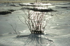 Frysning sjö Royaltyfri Bild
