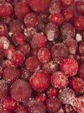 fryst bakgrundscranberry arkivbild