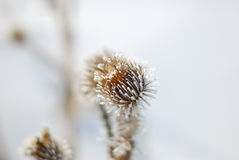 fryst blomma arkivbild