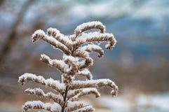 fryst blomma Fotografering för Bildbyråer