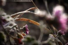 fryst blomma royaltyfria foton