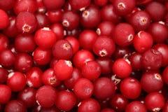 fryst cranberry royaltyfri bild
