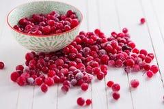 fryst cranberry royaltyfri fotografi