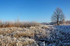 fryst fält Arkivfoton