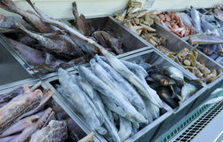 fryst fisk Royaltyfria Bilder