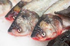 fryst fisk Freshfishmarknad Gilt-huvud bream Fiskförsäljning i marknad Fisk för havsbraxen på is ny isförsäljning för fisk Royaltyfria Foton