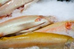 fryst fisk Freshfishmarknad Gilt-huvud bream Fiskförsäljning i marknad Fisk för havsbraxen på is ny isförsäljning för fisk Arkivfoton