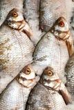 fryst fisk Freshfishmarknad Gilt-huvud bream Fiskförsäljning i marknad Fisk för havsbraxen på is ny isförsäljning för fisk Royaltyfri Fotografi