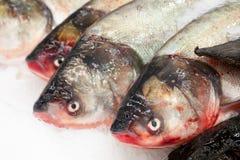 fryst fisk Freshfishmarknad Gilt-huvud bream Fiskförsäljning i marknad Fisk för havsbraxen på is ny isförsäljning för fisk Arkivfoto