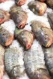 fryst fisk Freshfishmarknad Gilt-huvud bream Fiskförsäljning i marknad Fisk för havsbraxen på is ny isförsäljning för fisk Arkivbild