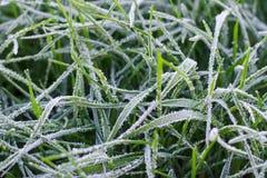 Fryst gräs som täckas med rimfrost royaltyfri foto