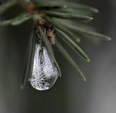 fryst liten droppe Royaltyfri Bild