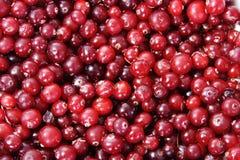 fryst red för bakgrund cranberries Arkivfoto