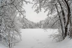 Fryst sjö som omges av dentäckte skogen royaltyfri foto