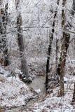 fryst skog Royaltyfri Foto