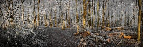 fryst skog Arkivbild