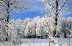 fryst skog Arkivfoto