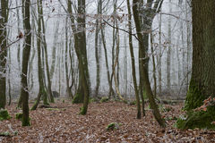 fryst skog royaltyfri fotografi