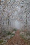 fryst skog royaltyfria bilder
