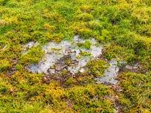 Fryst sprucket isvatten på den fryste jordvintern för grönt gräs Royaltyfria Bilder