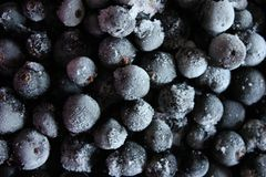 fryst svart vinbär Arkivbilder