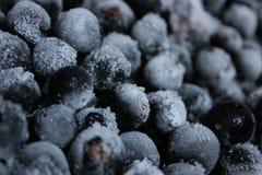 fryst svart vinbär Royaltyfri Foto