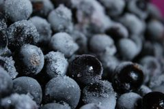 fryst svart vinbär Royaltyfri Bild