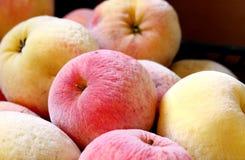 fryste äpplen Royaltyfria Bilder