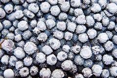 fryste blåbär Royaltyfri Foto
