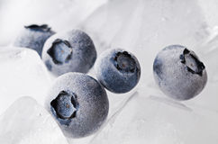fryste blåbär Fotografering för Bildbyråer