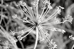 fryste blommor Arkivfoto