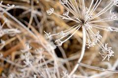 fryste blommor Royaltyfri Foto